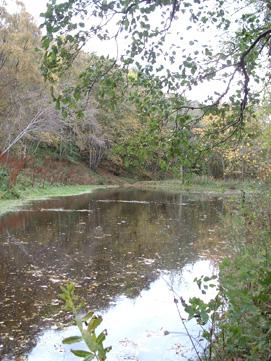 Fairy Glen Dam