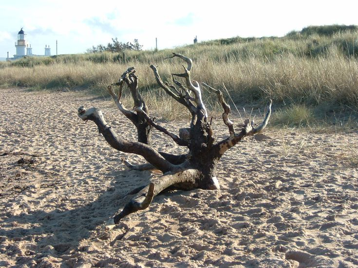 Driftwood on Chanonry Point