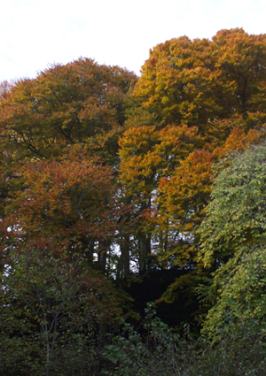 The Glen Colours
