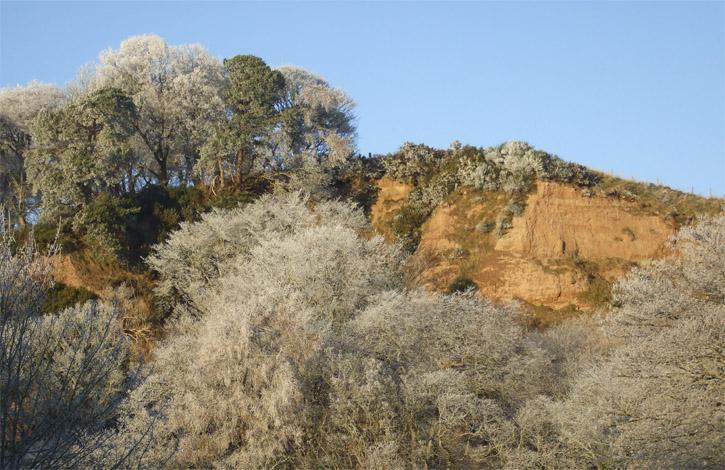 White Tree's