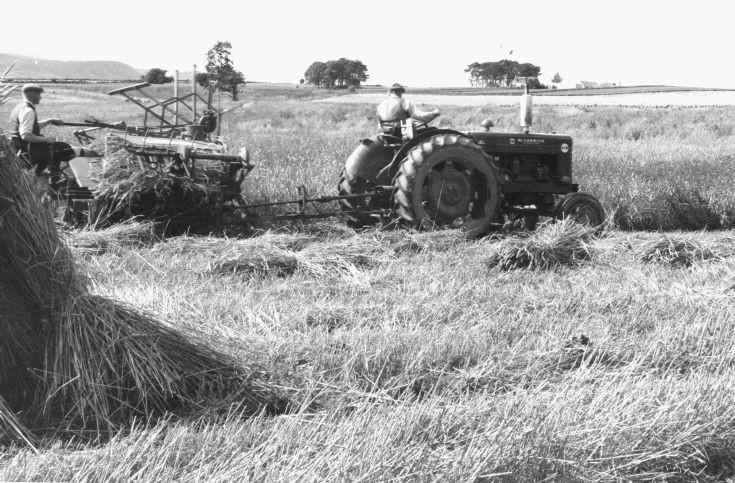 Harvest Mountpleasant farm.   c1960