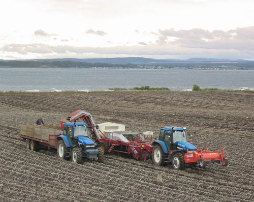 Potato Harvesting in Rosemarkie