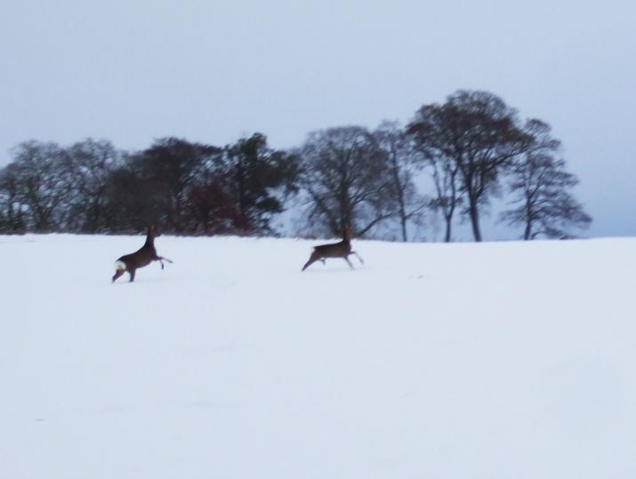 Dancing deer!