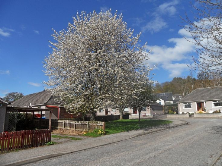 Spring at Anderson Drive, Fortrose